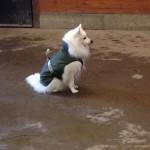 Stallhunden Pixie