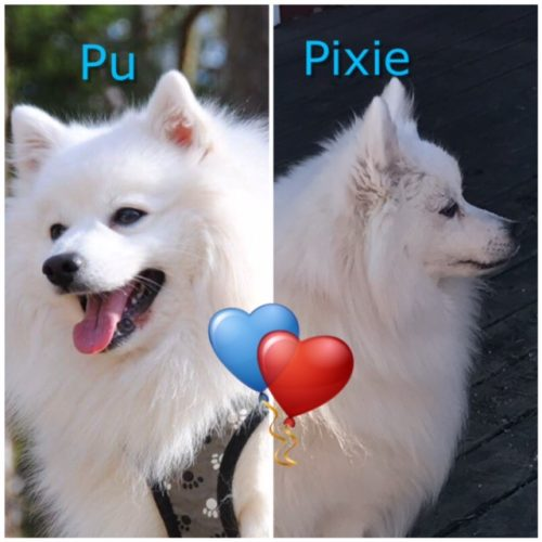 PixiePu