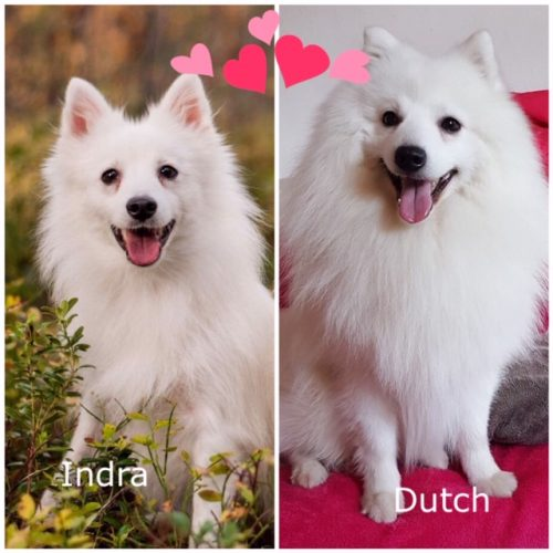 Indra-Dutch