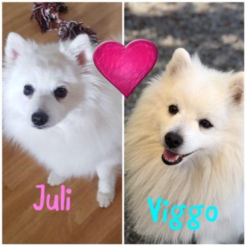 Juli-Viggo