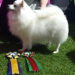 Pixie Sv-champion 2016