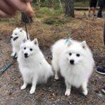 Snö, Olympia & Mio